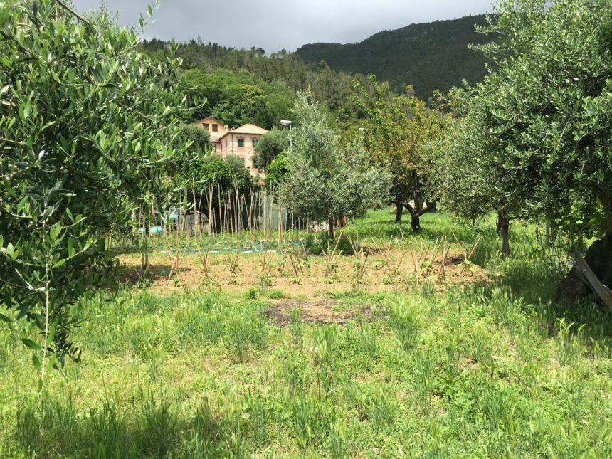 Appartamento con terreno in vendita a Cogoleto. Una vista del terreno.